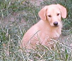 Starfire Orion as a puppy