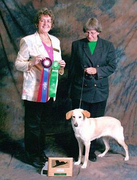 Sydney's National Best of Breed show picture